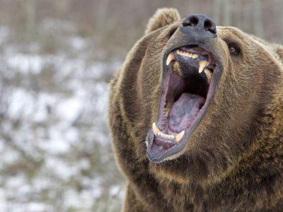 Nutze den Bärenmarkt